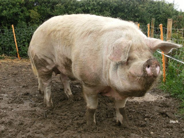 Farm Open Day Boris